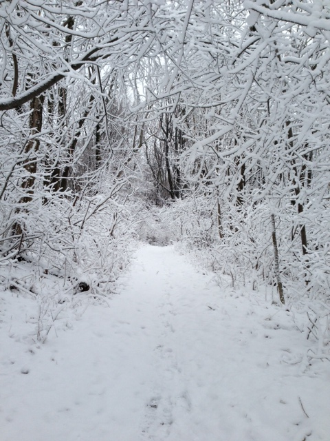 Pristine trails in a winter wonderland