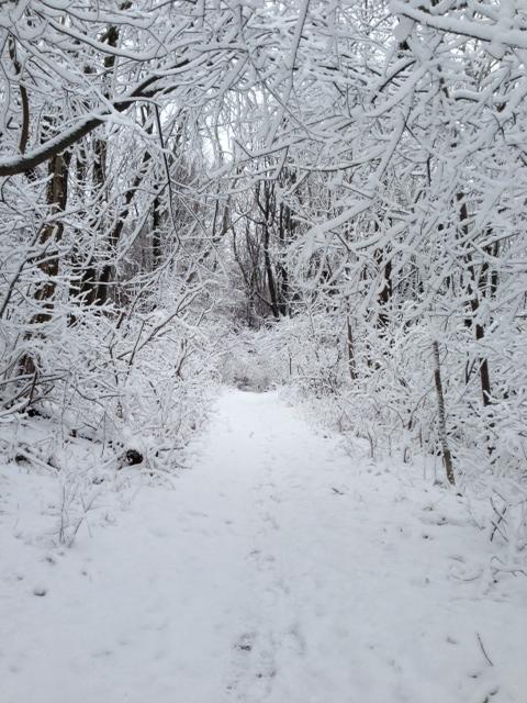 Pristine trails in a winter wonderland