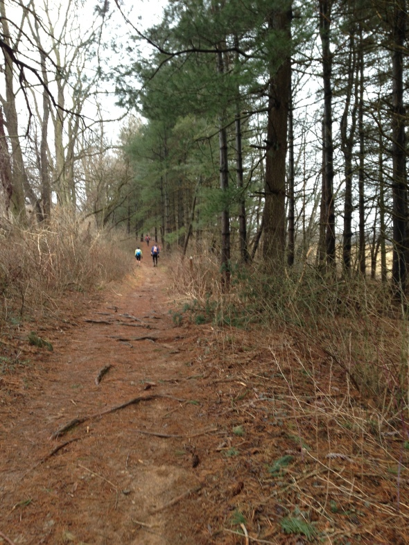 pine needle trail