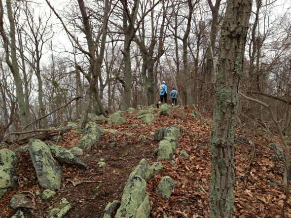 Climbing on the ridge - that resembled a stegasaurus' back