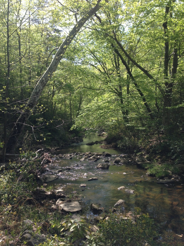 The first half of the course followed this sleepy creek.