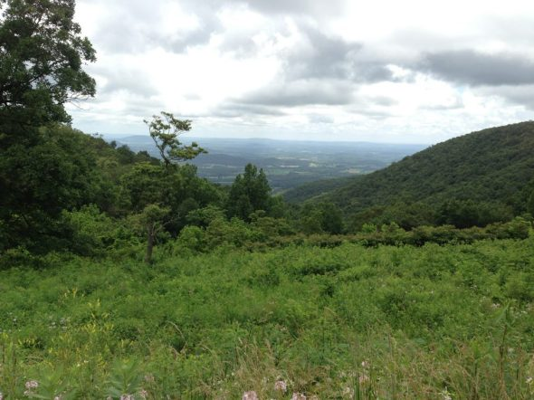 Mt. Marshall Overlook