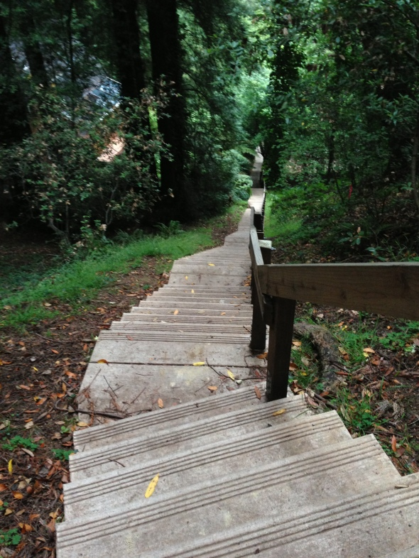 A few of the 688 steps that start the Dipsea Trail in Mill Valley.