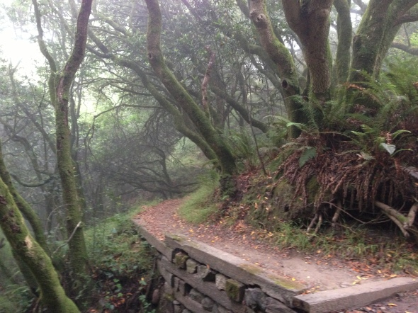 Changing scenery on the Dipsea.