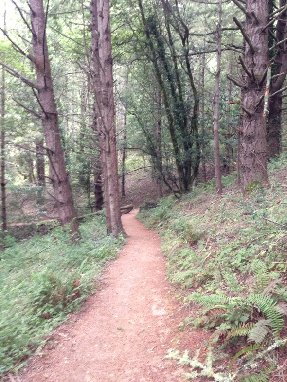 The Dipsea Trail