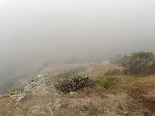 Not a lot of views that morning, but a wonderful run on the Dipsea.