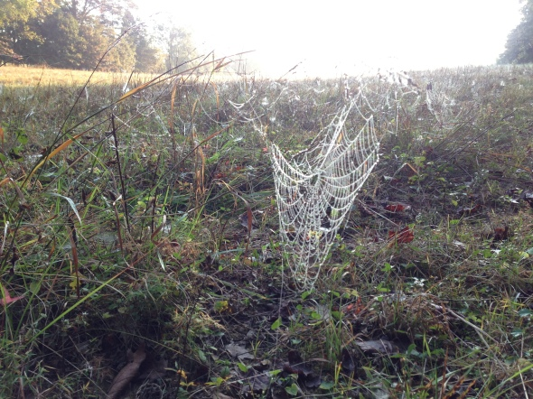 Spiderwebs in the morning dew as far as the eye could see