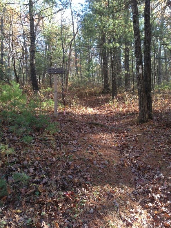 The Wild Oak Trail