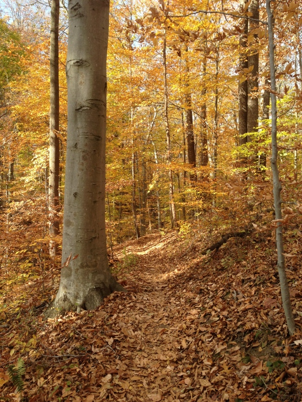 Rosaryville State Park, Upper Marlboro, Maryland