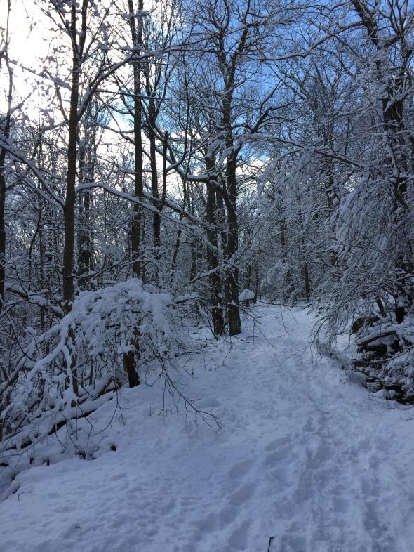 Big Meadows Horse Trail